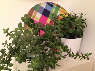 Vetplantjes samen