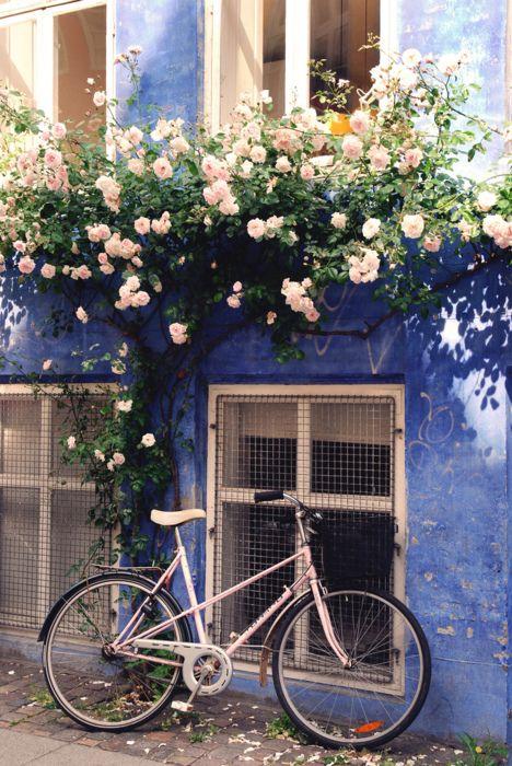 rozensnoeien