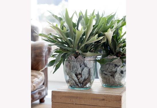 varen-glazen-pot-bloemenbureauholland-547x377